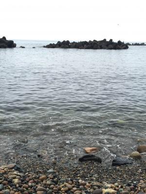 福井の浜で取れるバフンウニで作った天たつの越前仕立て汐雲丹は最高の風味。近年福井のバフンウニは少なくなってきています。